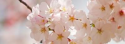 spring_flowers_banner